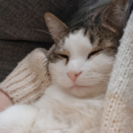 Profile photo of ChaoticMaria