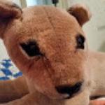 Profile photo of bigkitty