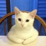 Profile photo of Vlou